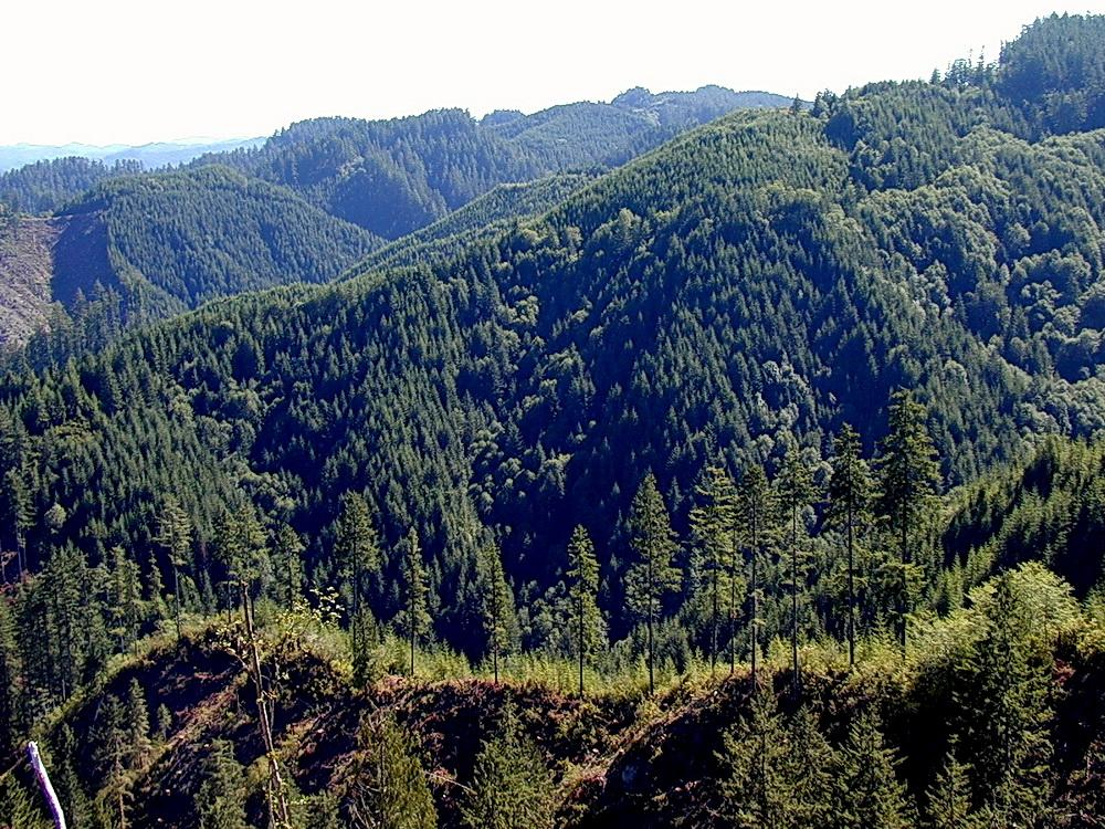 Elliott State Forest.