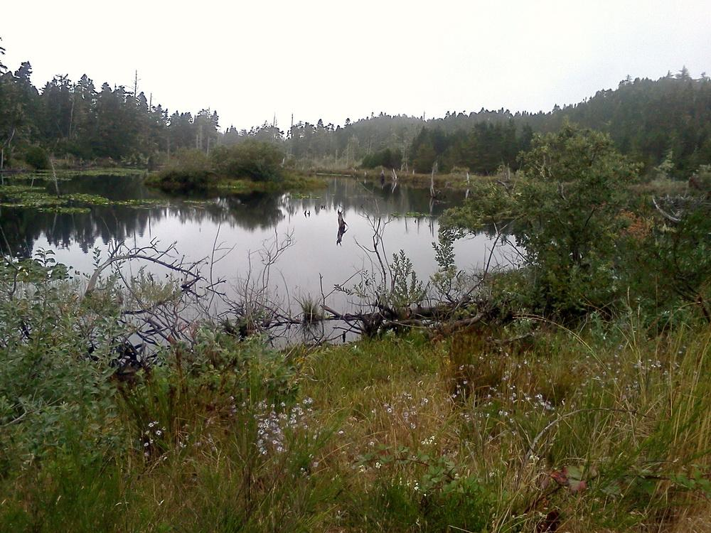 North Spit wetlands near Jordan Cove site.