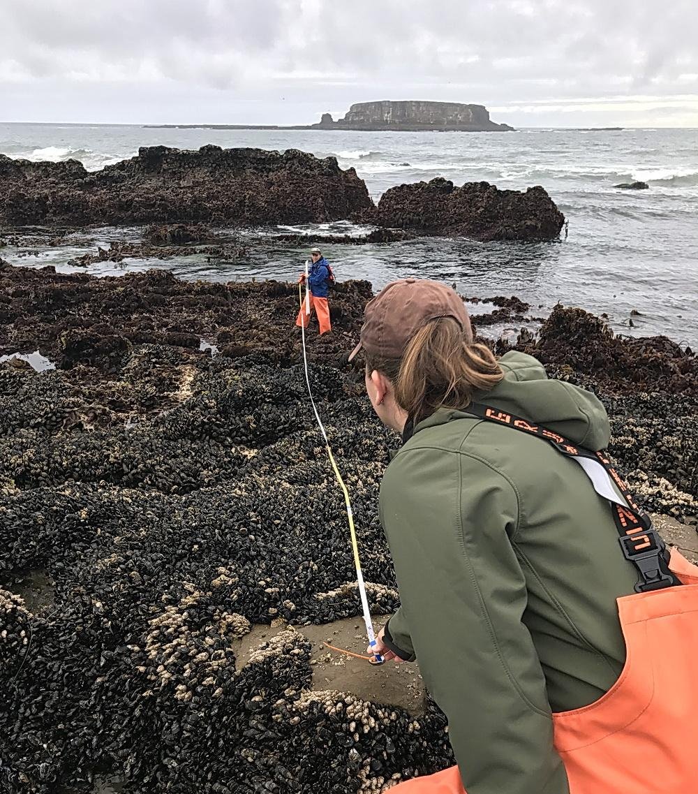 Research underway at Otter Rock Marine Reserve.\Photo courtesy of ODFW.