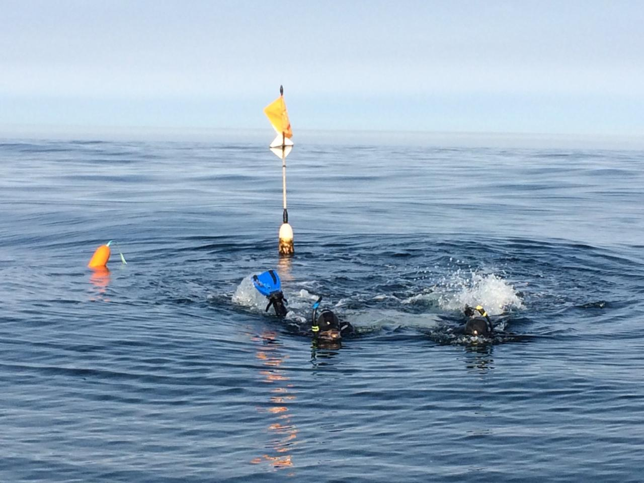 Research divers in a marine reserve.\Photo courtesy of ODFW.
