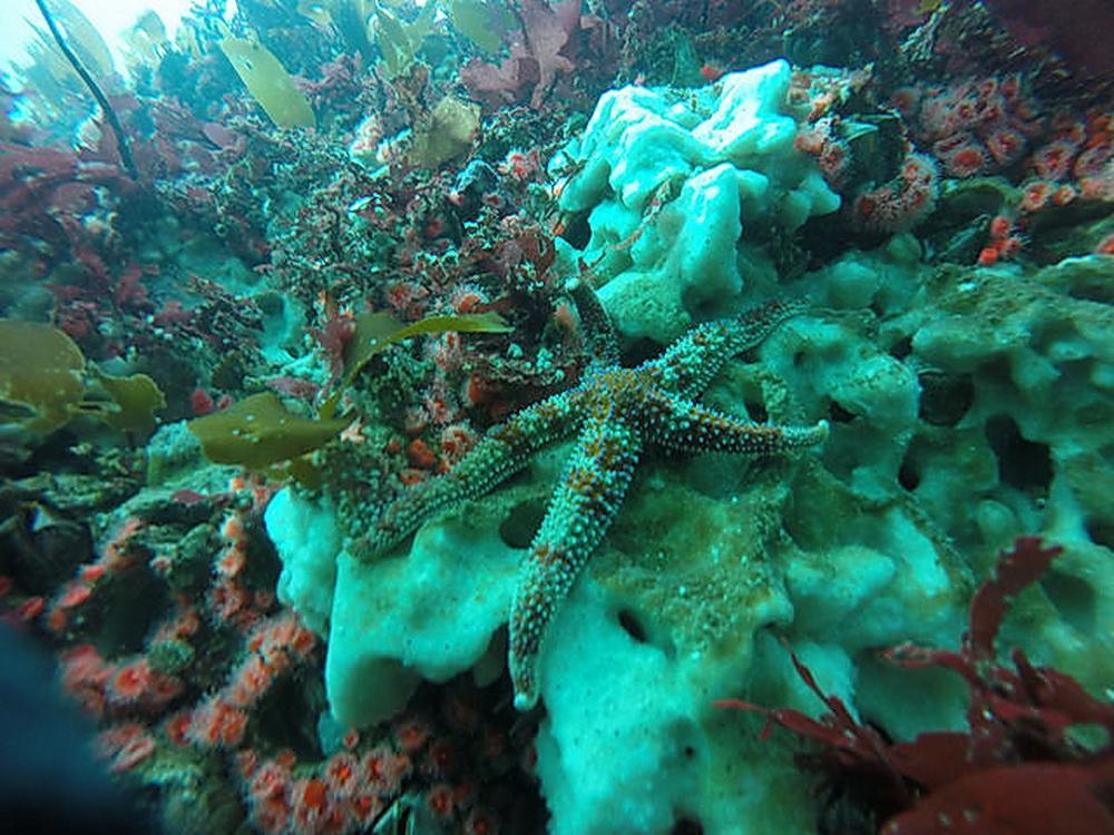 Undersea habitat off the Oregon coast.\Photo courtesy of ODFW.