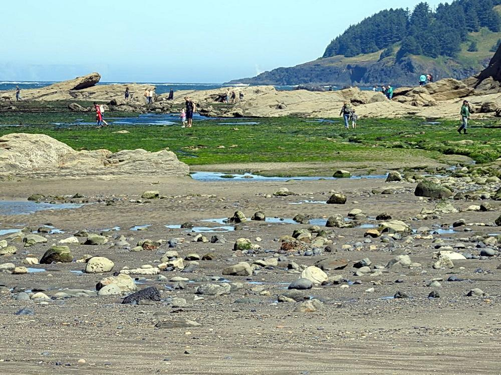 People exploring tidepools at Otter Rock.\Photo by Cathy Tronquet.