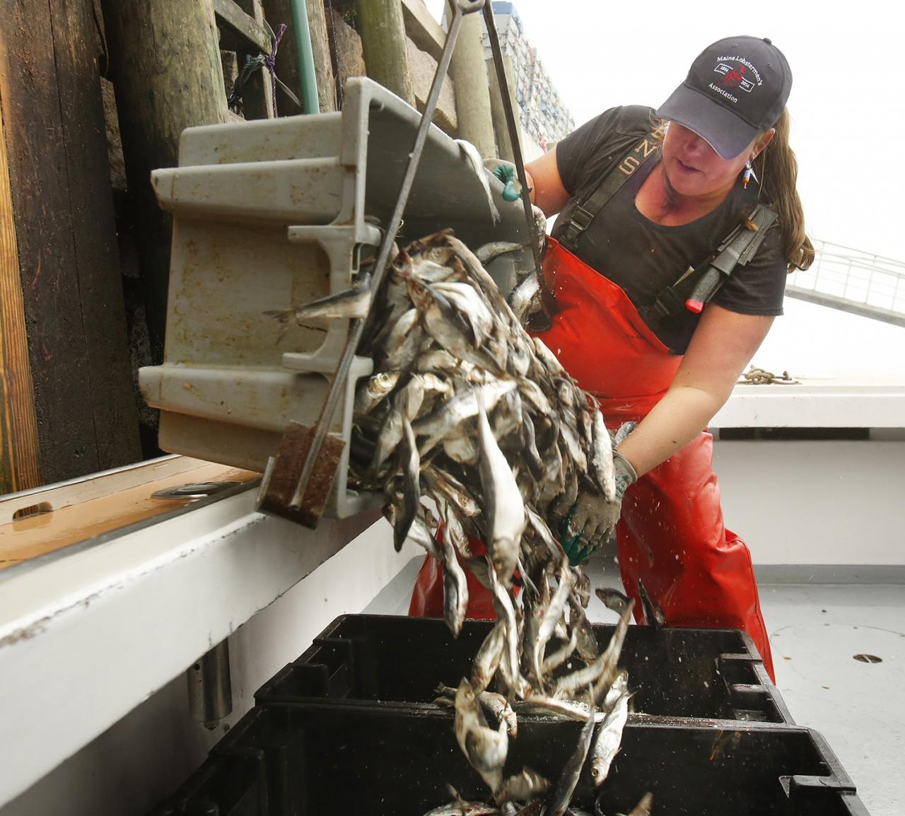 Woman in commercial fishing.