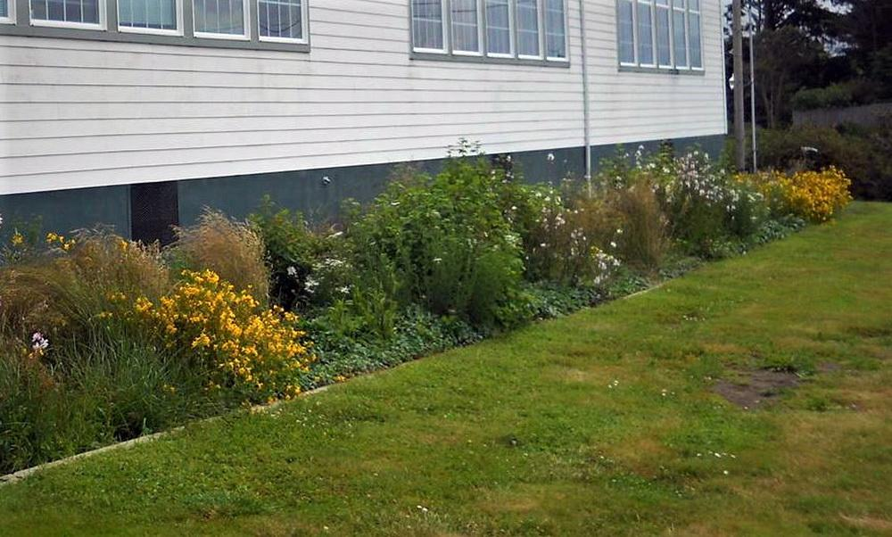Rain gardens are one of the tools for managing urban run-off.