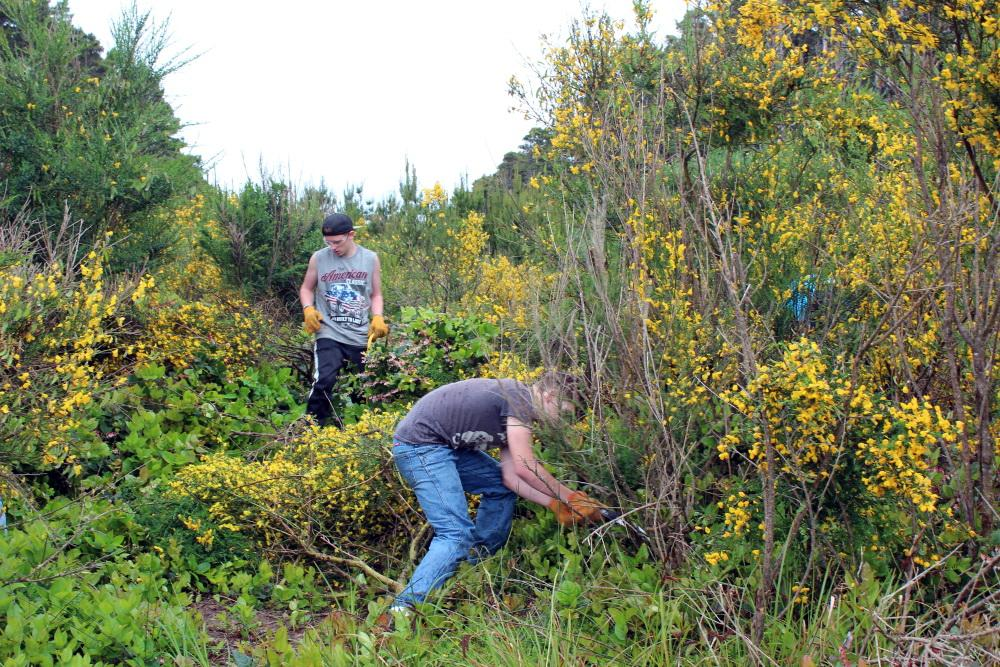 Student volunteers removing invasive Scotch broom.\Photo by Dina Pavlis.