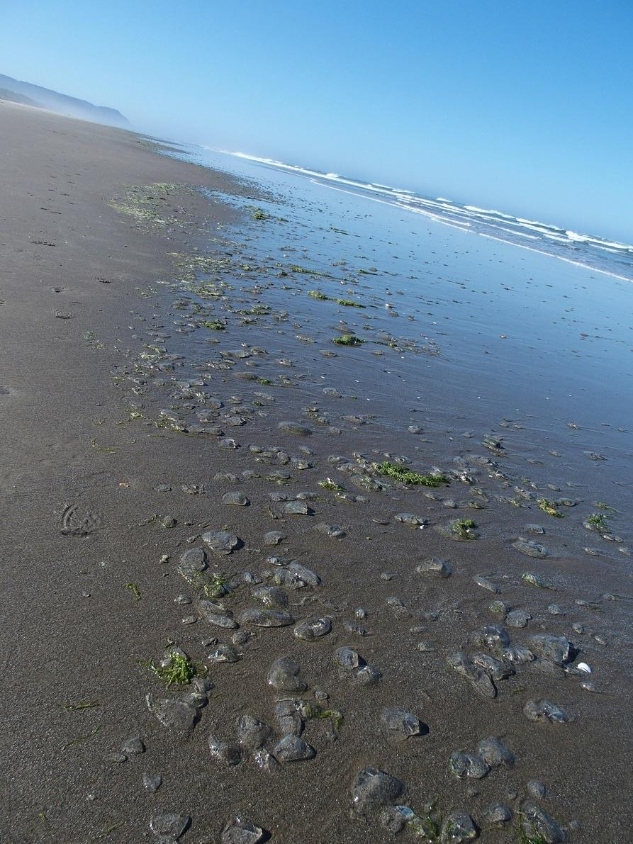 Crystal Jellies on the driftline
