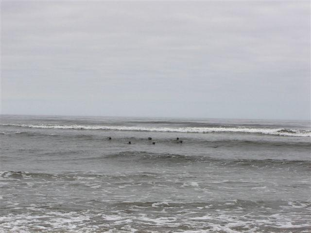 A group of harbor seals gathered at the mouth of Siltcoos Creek (this photo shows some of the 16 we saw).