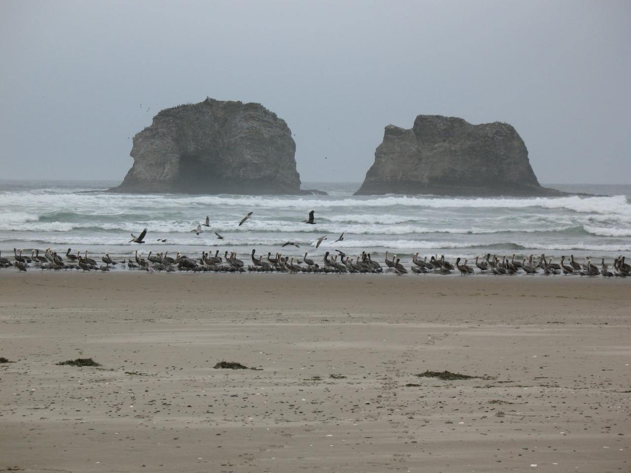 Mile 292.   I've never seen this many pelicans.