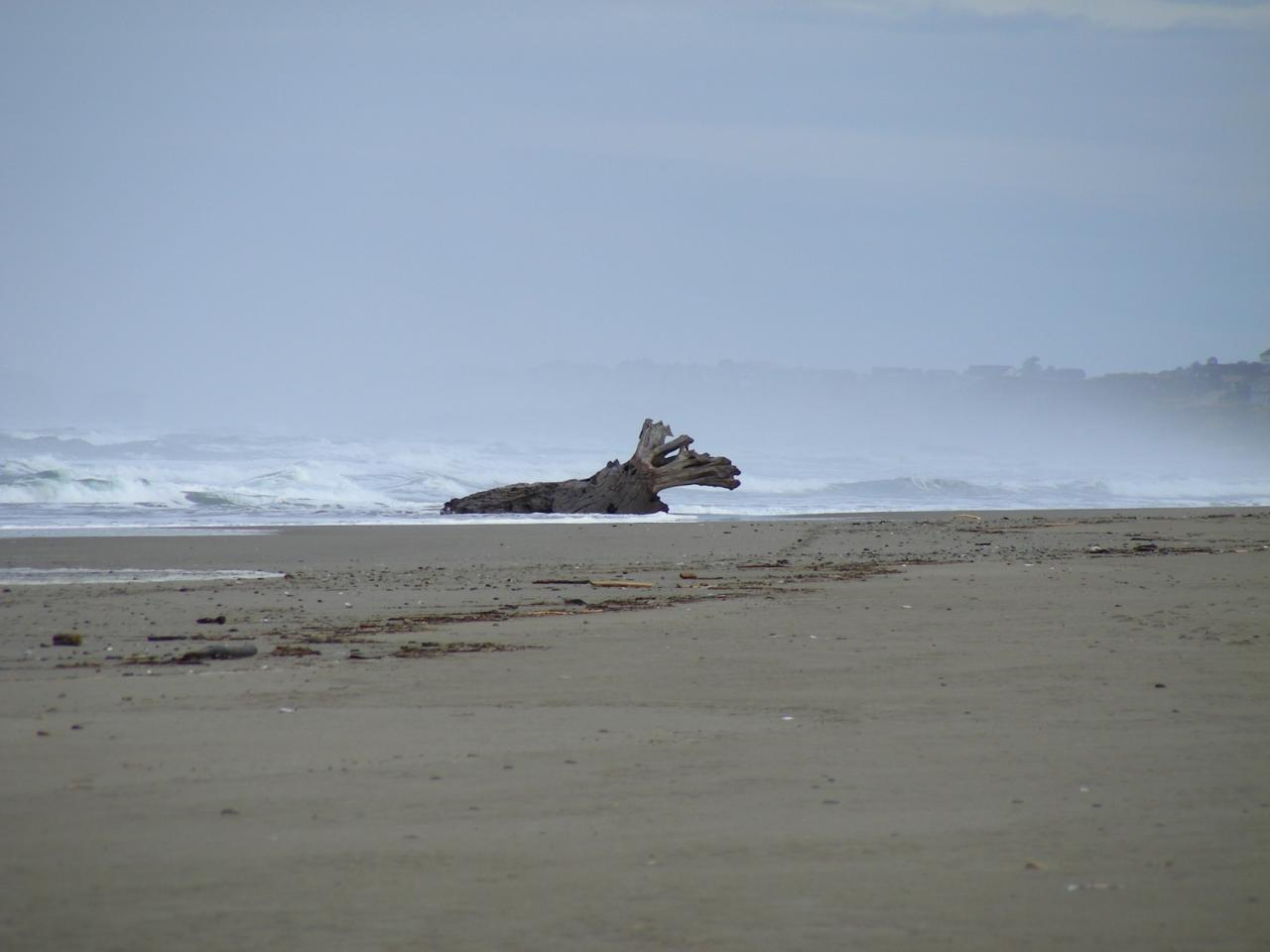 This pretty driftwood log is new to this beach.