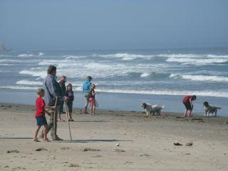 People and dogs on the beach and in the ocean