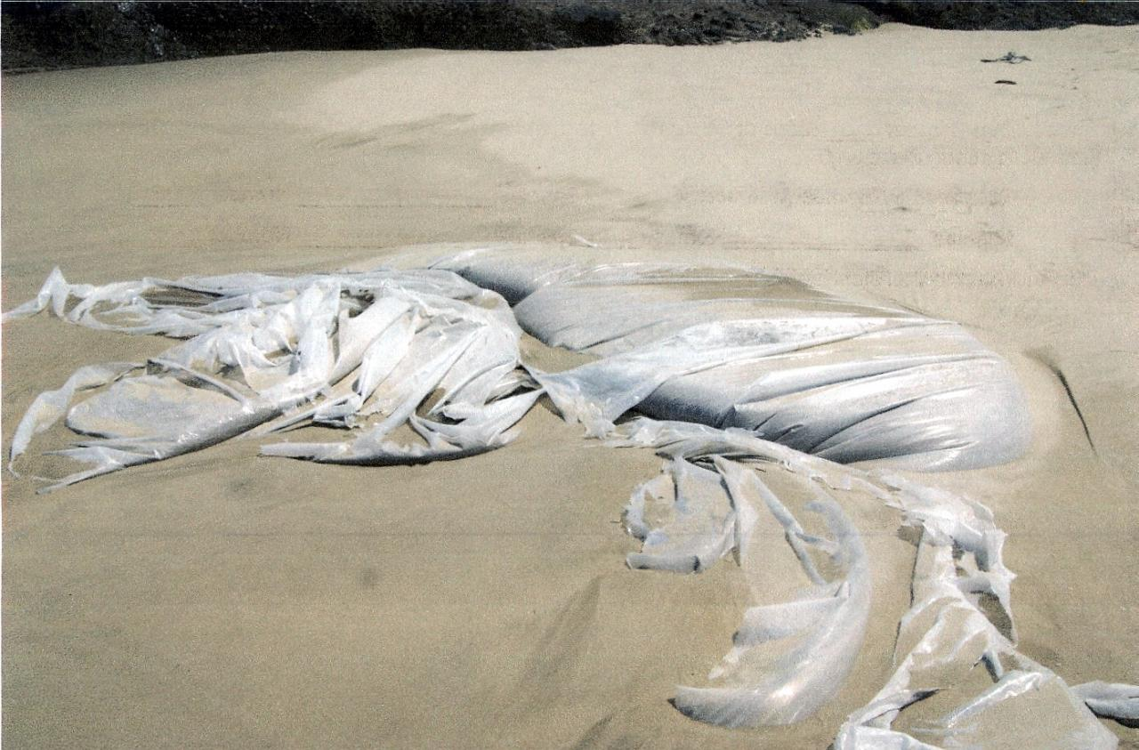 Photo of plastic 10 ft. long found on sand.