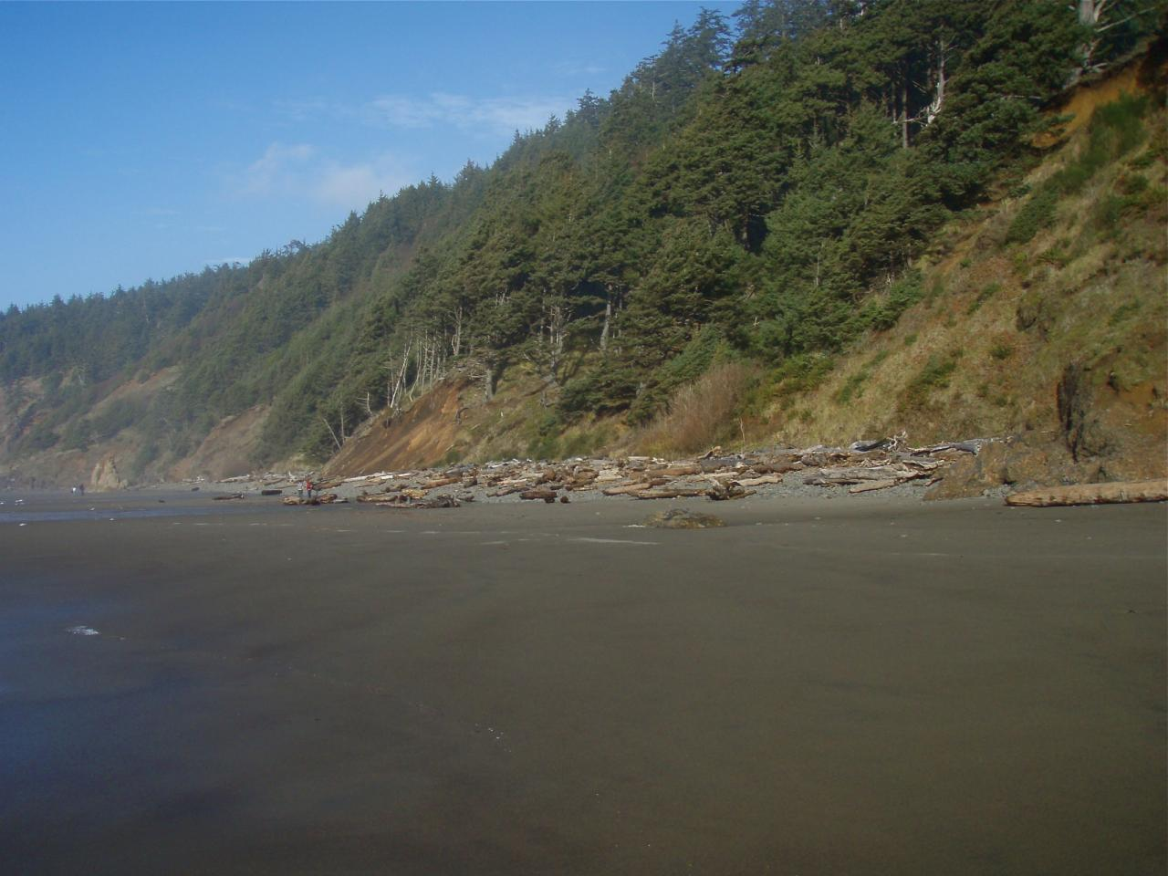 Shows clean beach, a few walkers and logs thrown up high on beach.