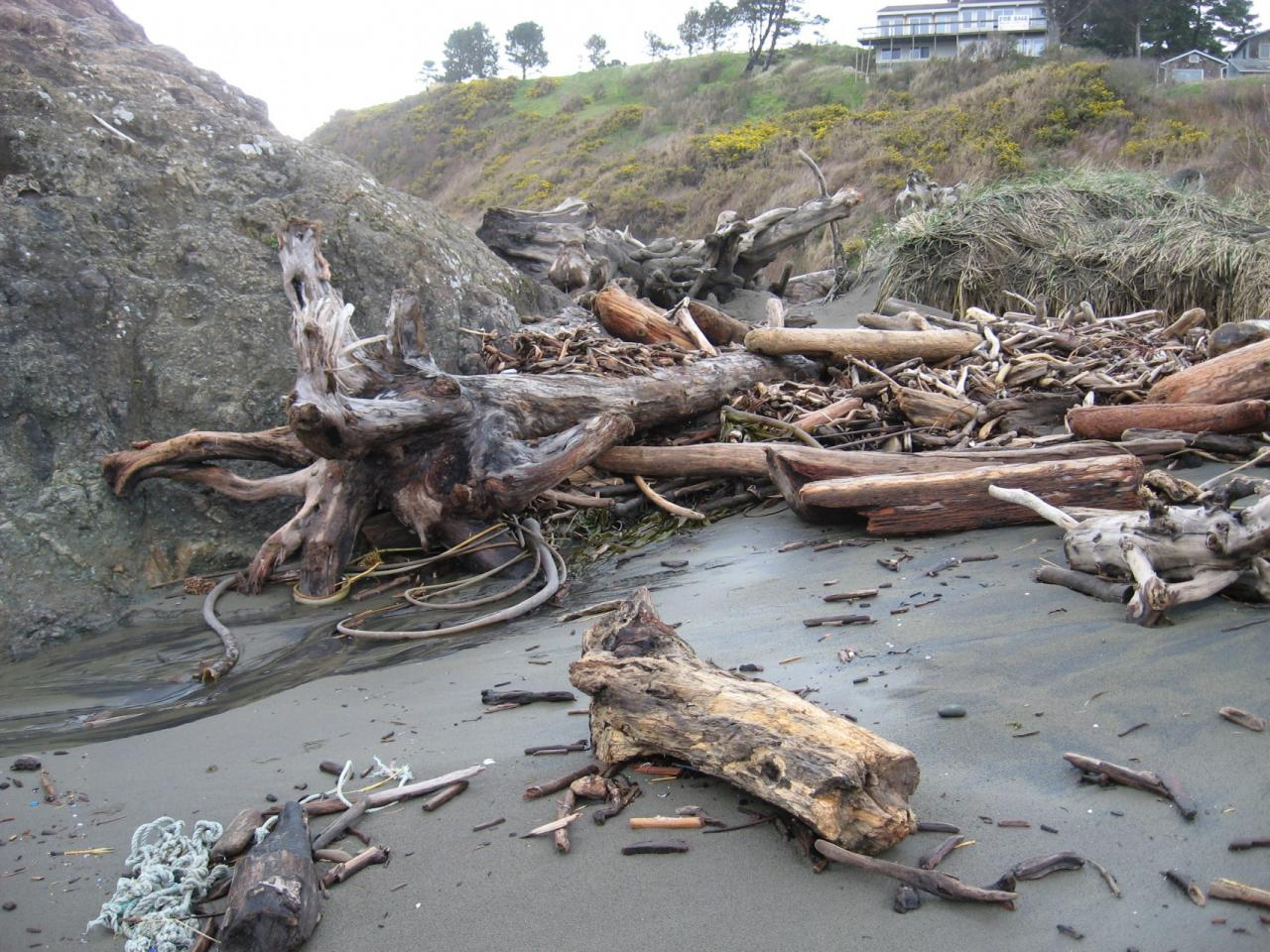 A large amount of driftwood has accumulated this winter, especially around Battle Rock.