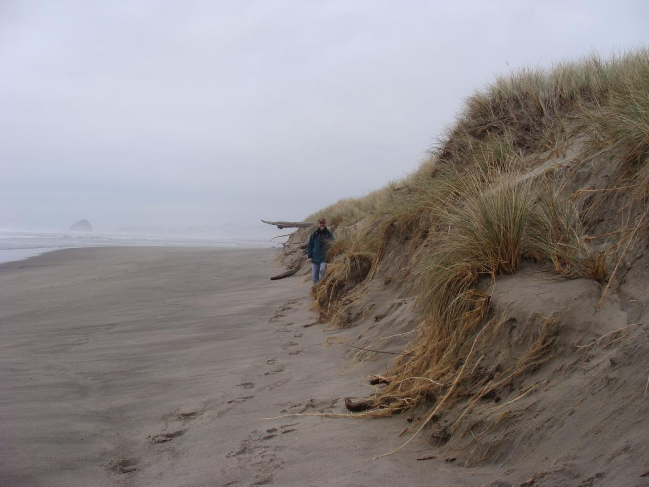 High beach erosion on the upper beach about 200 yards south of Nestucca River mouth,