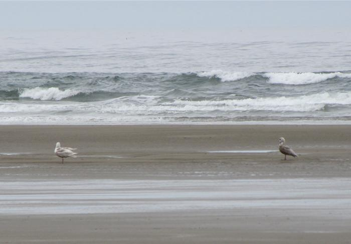 Not many birds on the beach this morning.  Here are two of them.