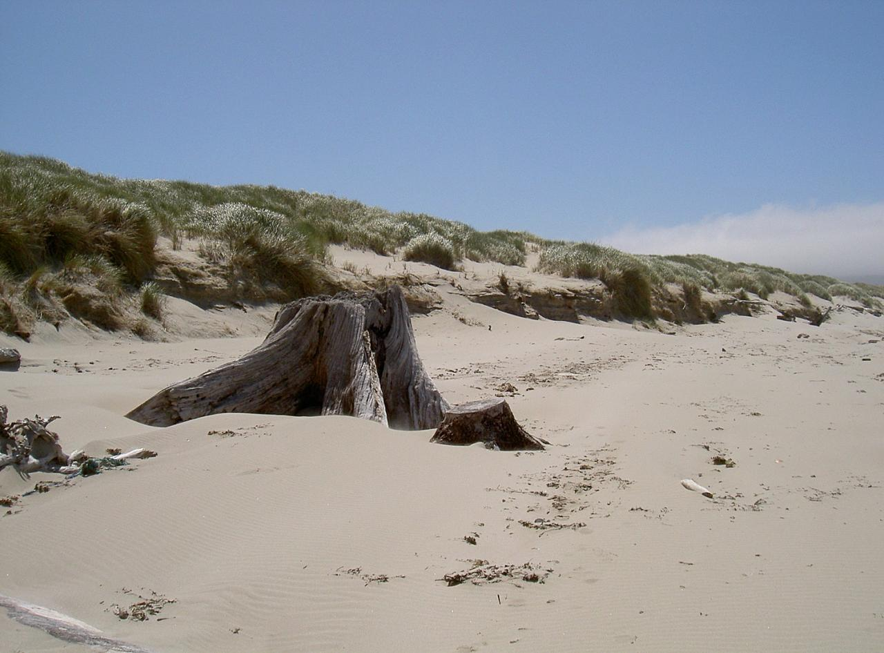 Sand drifts partially re-building eroded area of dunes