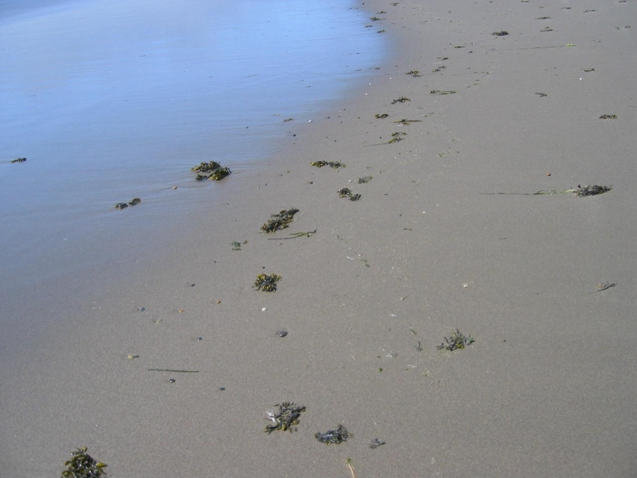 Rockweed and eelgrass accumulated along the low-tide zone.