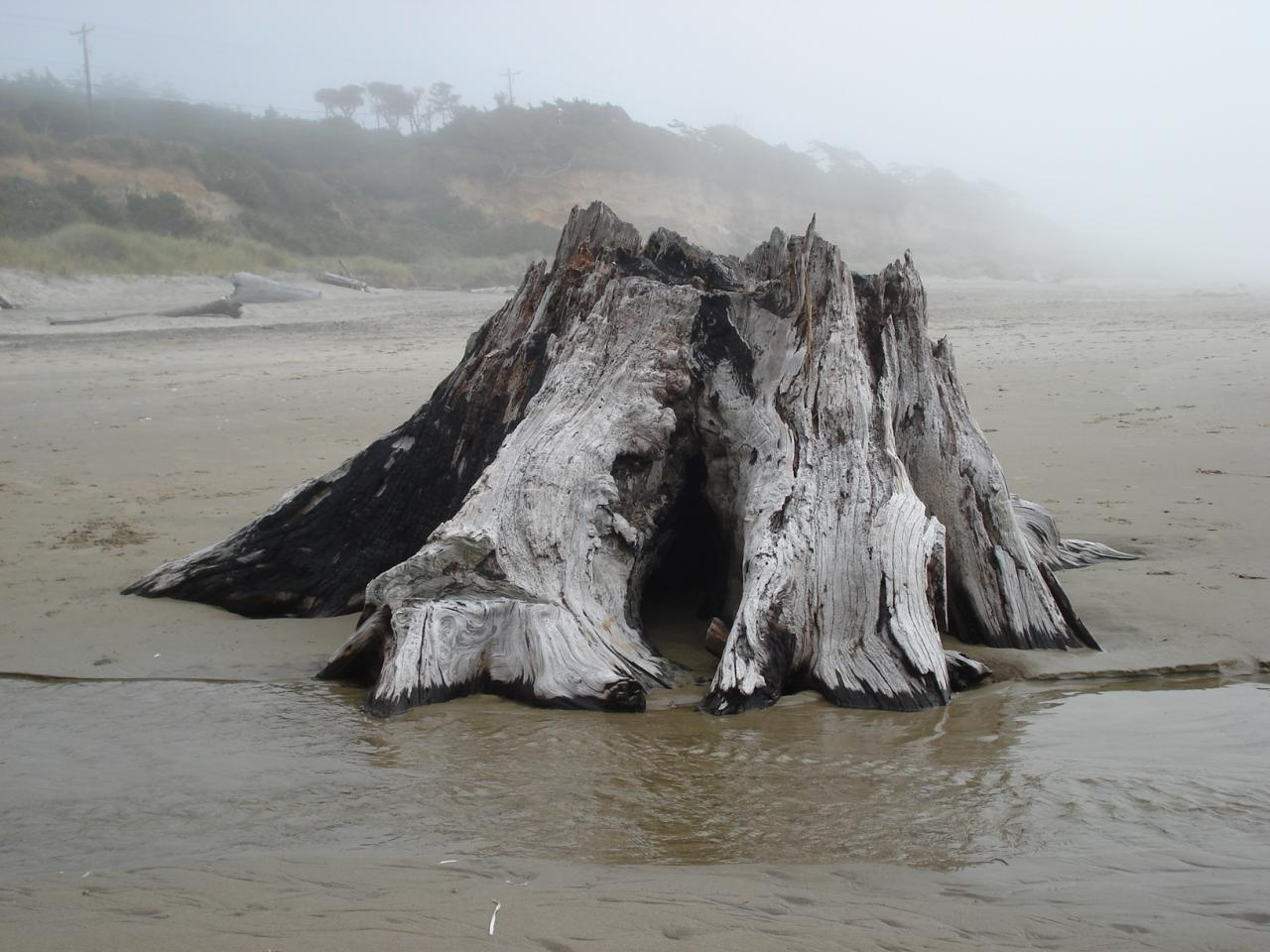 Large tree stump near cliff area with stream water passing