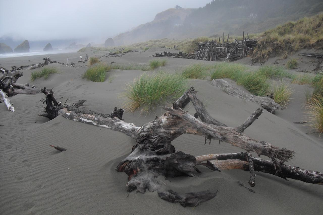 """Large, long lasting driftwood """"fort"""" on mild, very coastal day. Cape Sebastian in far distance."""