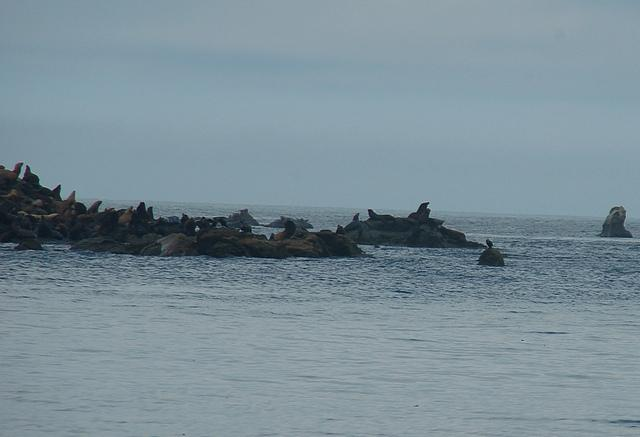 The sea lions were rather far off, but the photo shows there are lots of them.