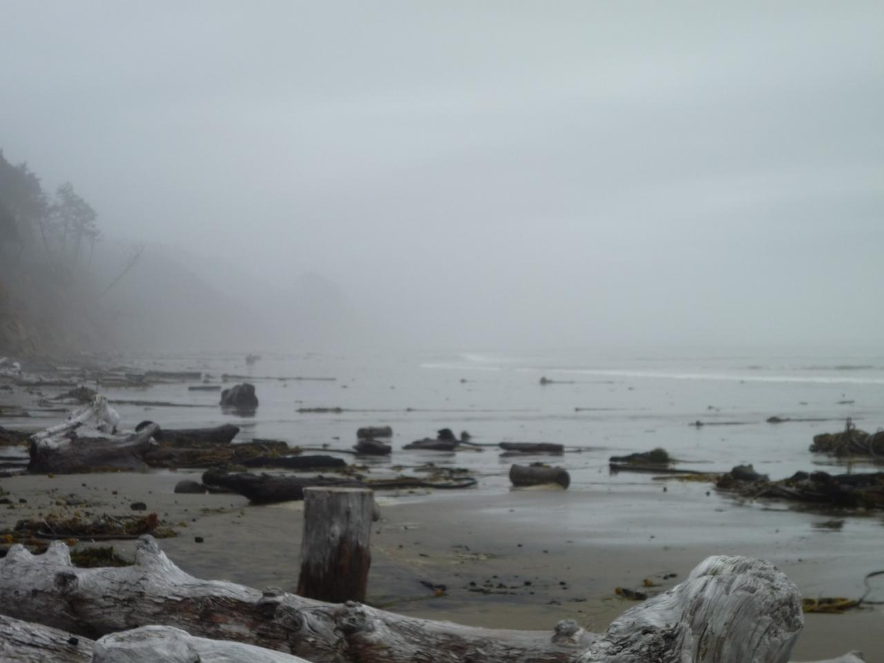 looking south from north end of Mile 224, foggy day, not long after high tide.
