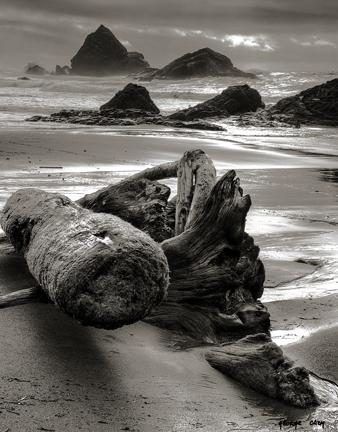 A bit of the driftwood washing up on Harris Beach during the recent storms.