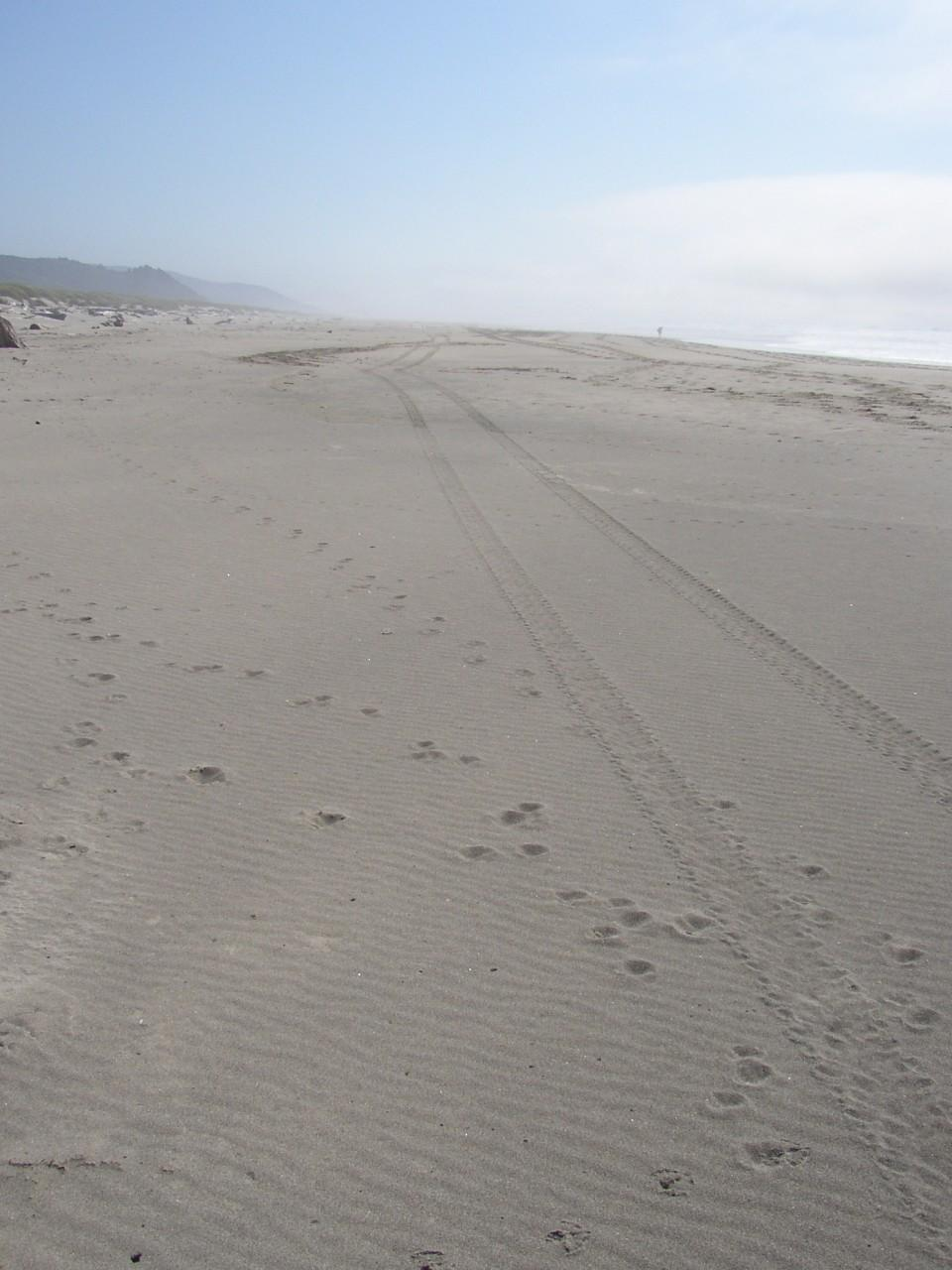 The ATV tracks ran along the beach above the surfline for much of the mile.