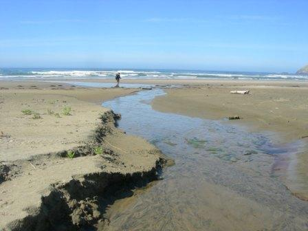 """Small stream that flows down from the bluff and across the sand in a fairly direct line. Someone had added a driftwood """"bridge"""" to walk across midway up the beach. The stream can be easily waded at most places."""