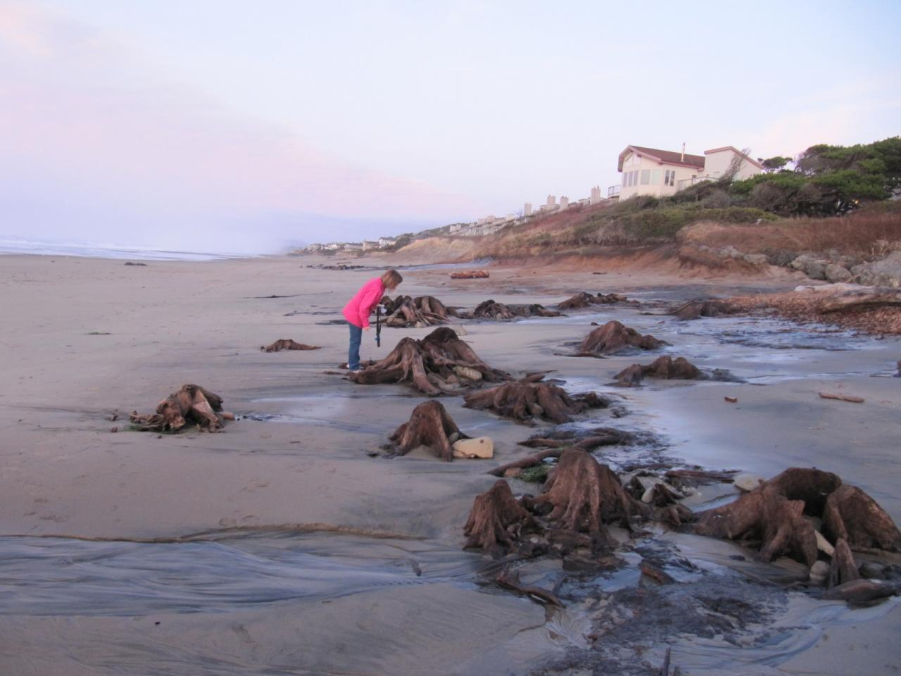 Collection of stumps after a high tide.