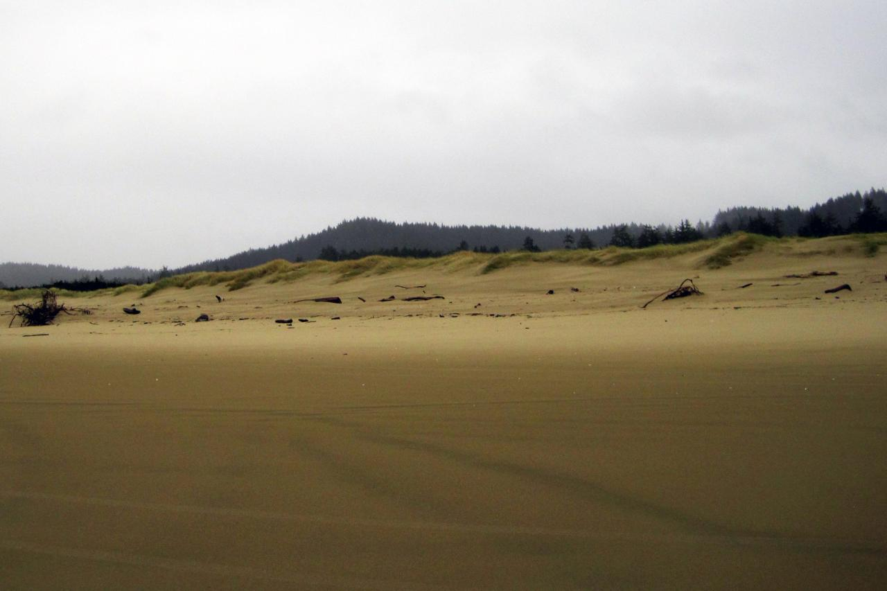 Typical winter build up of sand at dune face