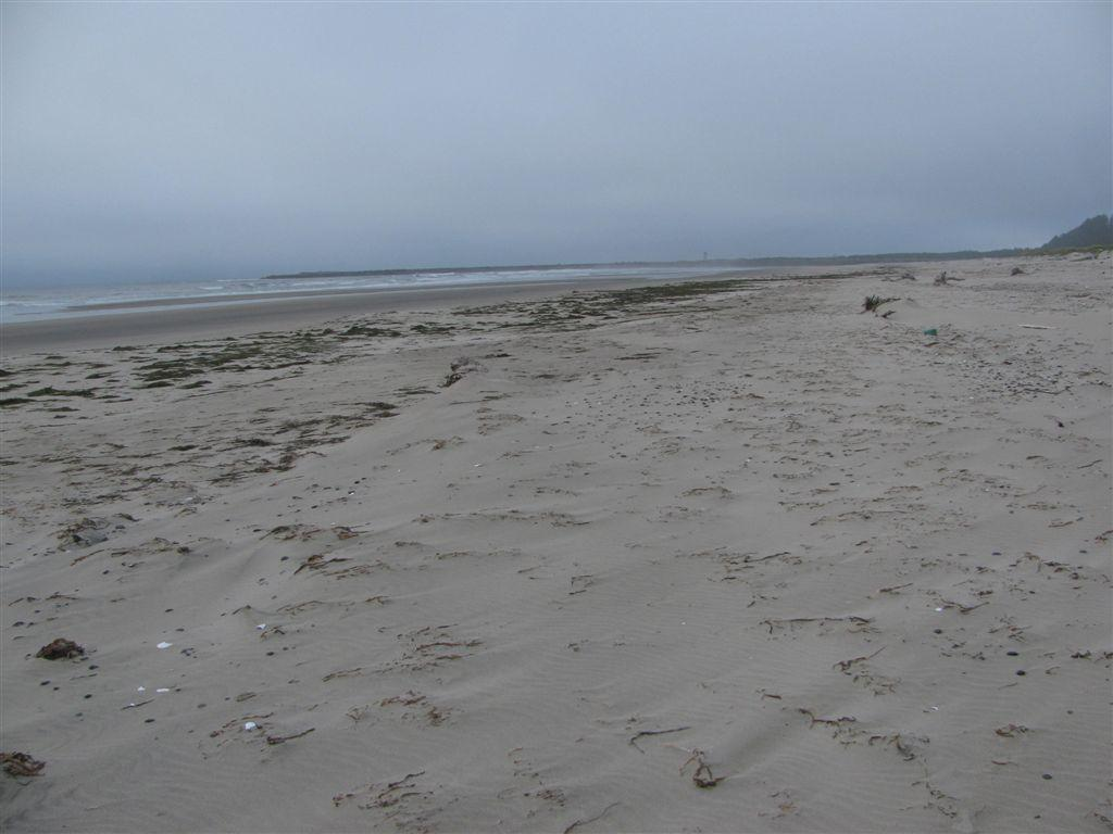 Looking north one sees a broken string of piles of kelp.  A bit unusual.