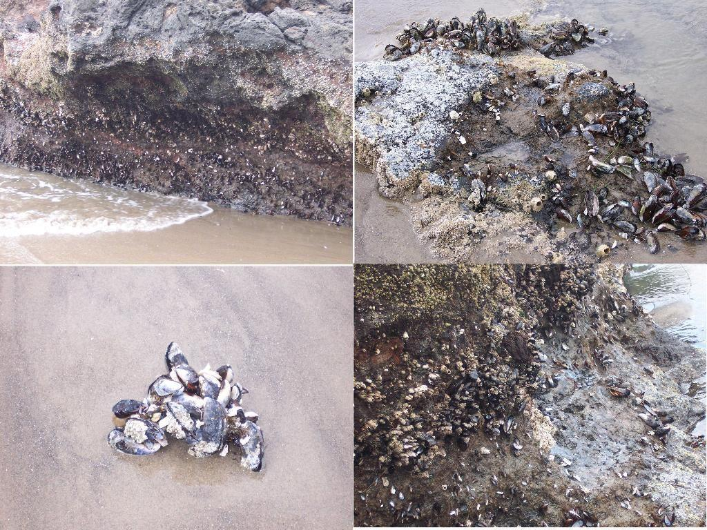 rocks where mussels and barnacles have been washed away