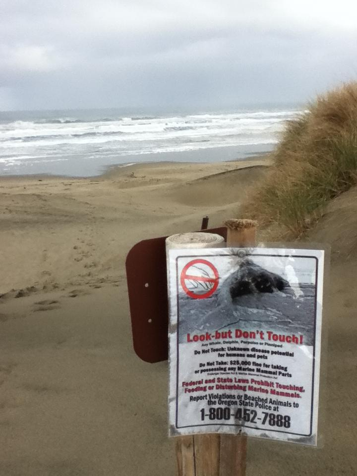 Sign warning visitors not to touch or remove marine-mammal parts.