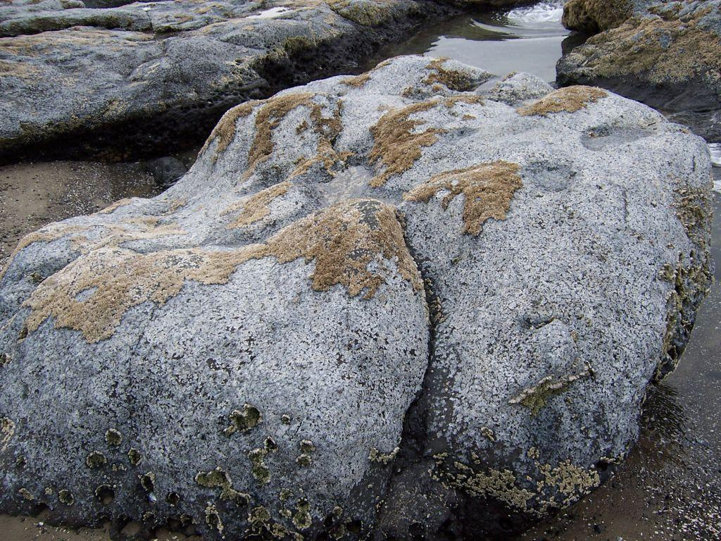 rocks where barnacles are gone
