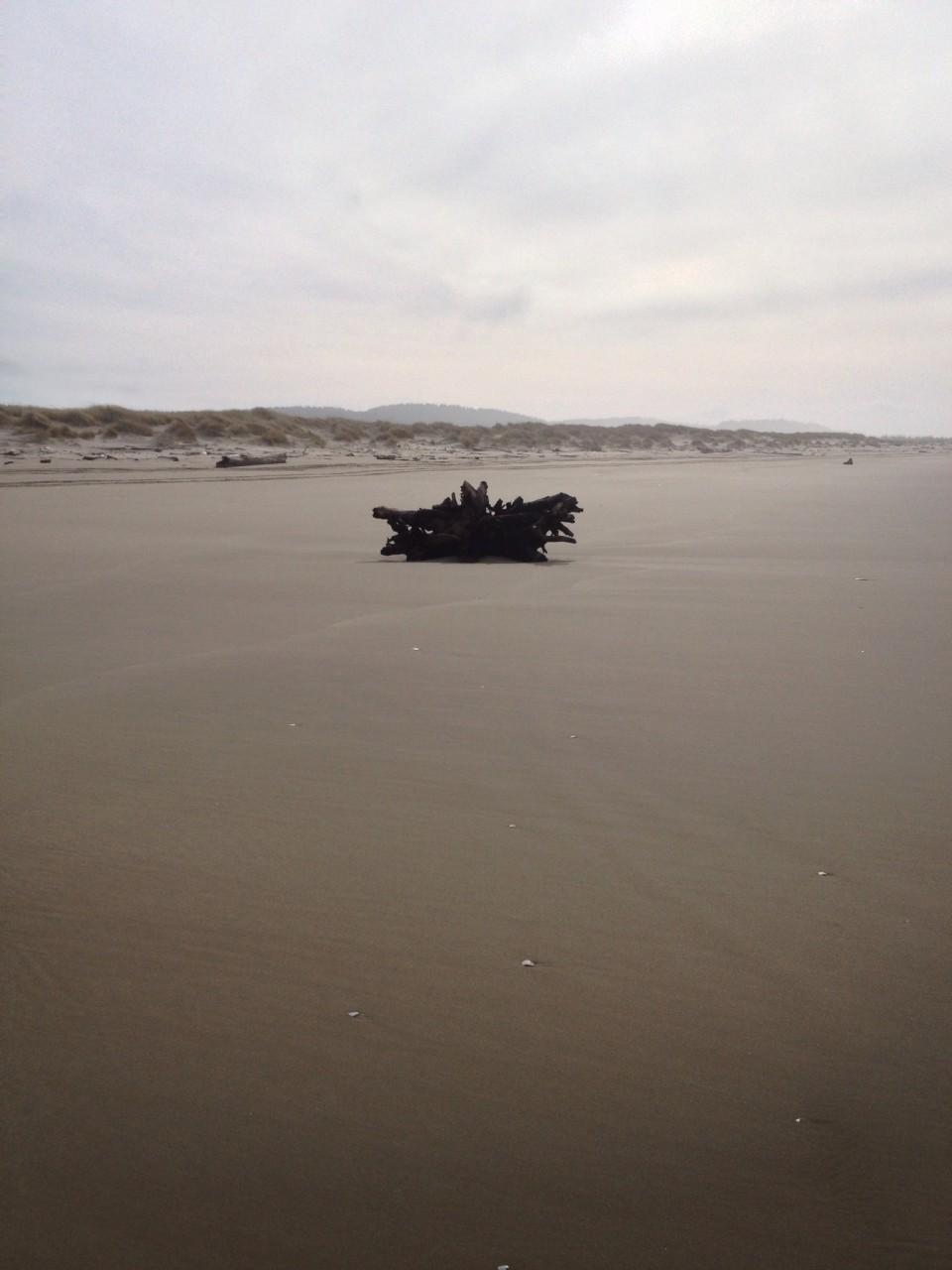 Lots of driftwood piled up next to the foredune