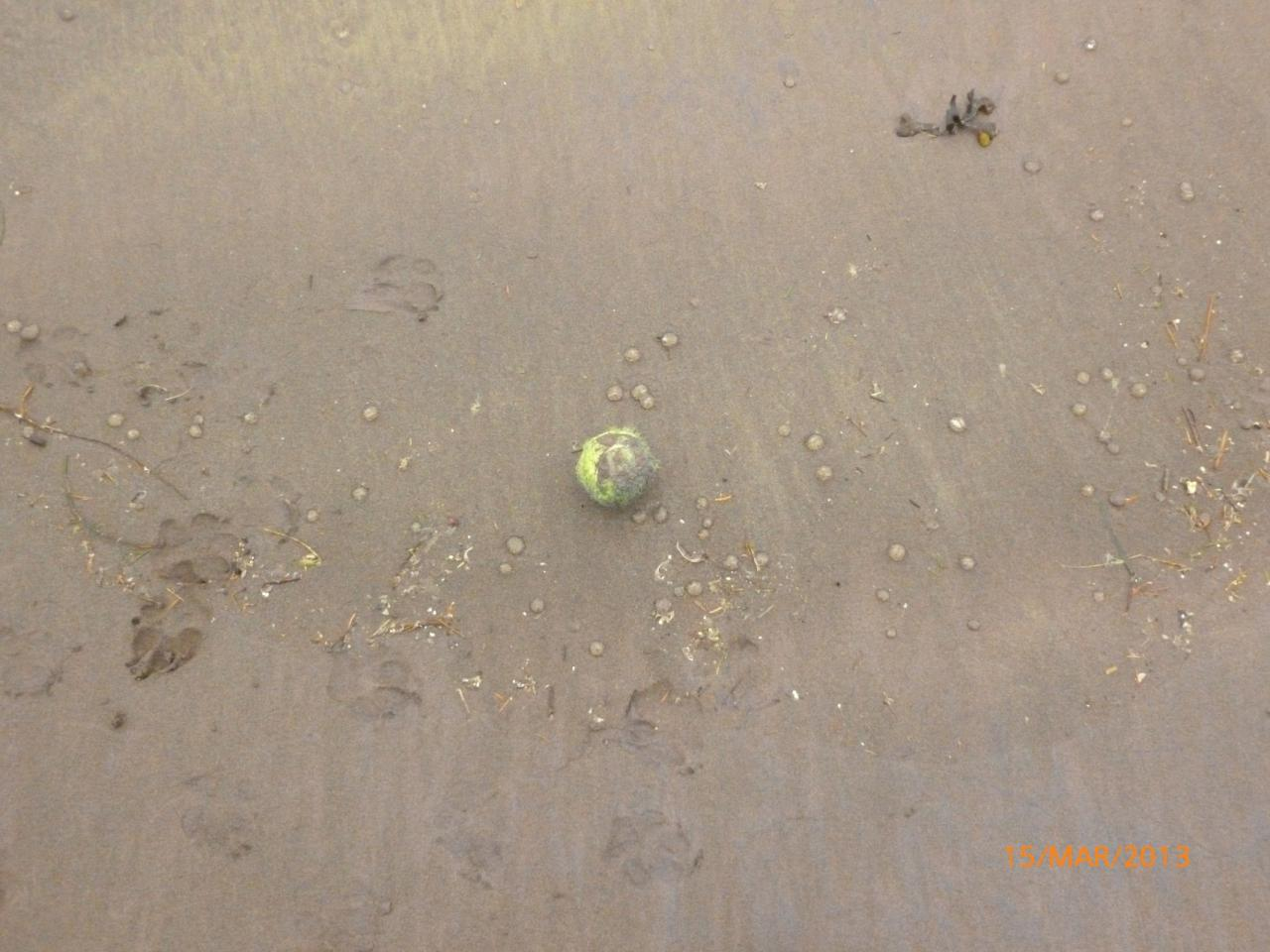 Driftline notable for substantial number of small clear jellyfish.  Tennis ball included for scale.
