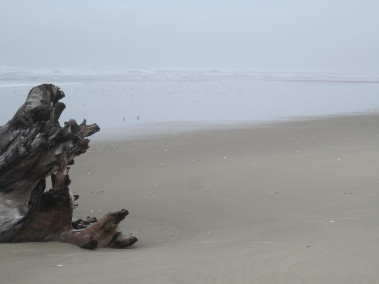 What more can I say...driftwood and sand