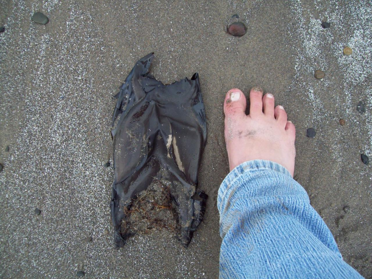 """""""Big Skate"""" egg case (probably), about one foot long."""