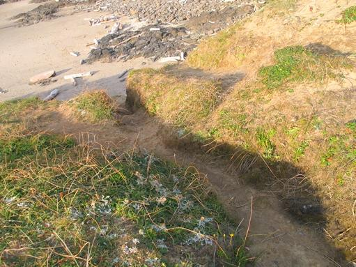 One of the several north beach access trails at Strawberry Hill are becoming very deep.