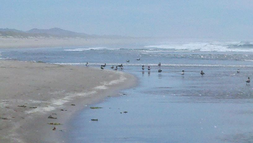 With over two dozen people visiting this area of the beach, the birds still found their own area to occupy.