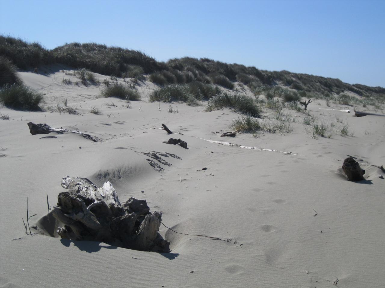 Erosion of coastal dunes after major storm.