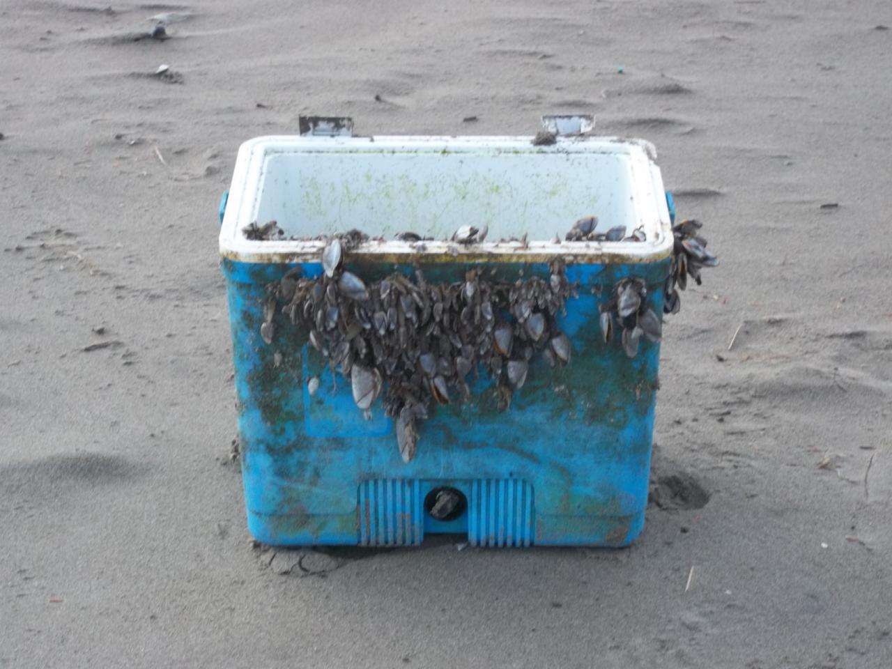 A heavily encrusted cooler came in on the mornings high tide.