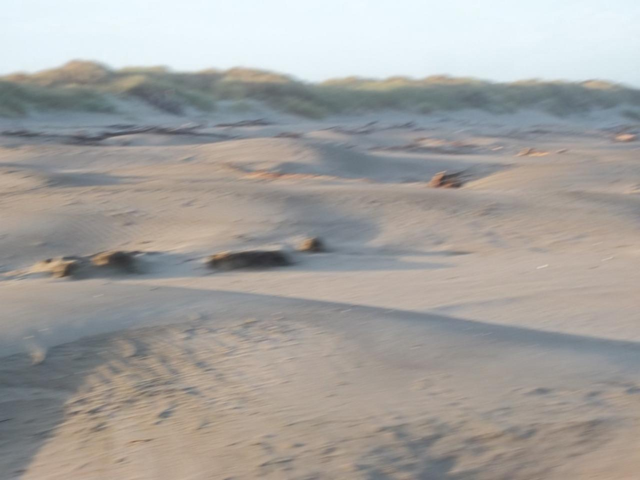 Fierce northerly winds leave sculptured mounds along this stretch of beach just north of the Coquille River.