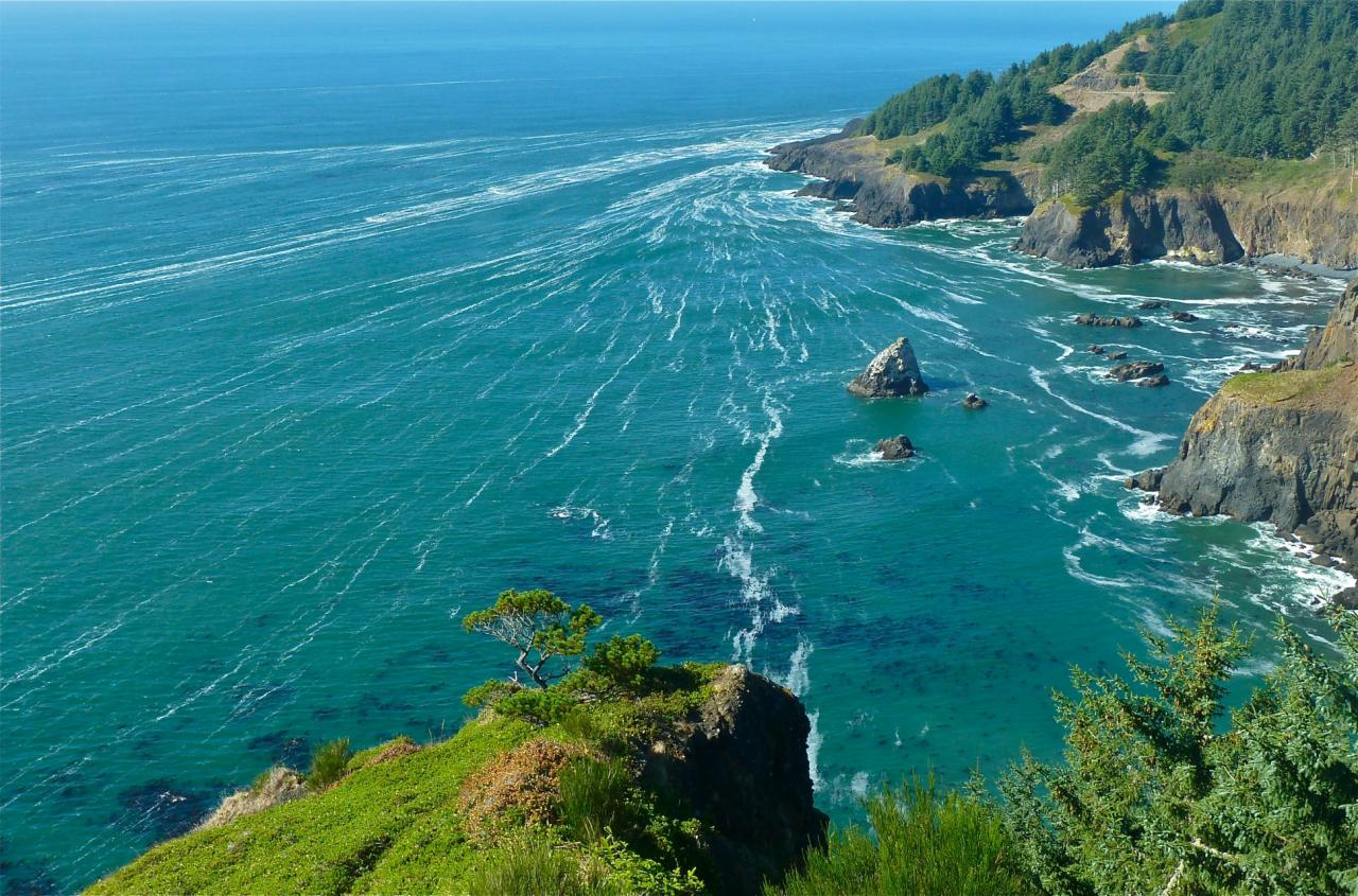 Phytoplankton-derived foam aggregated into wind-driven bands as viewed looking north from Lookout.