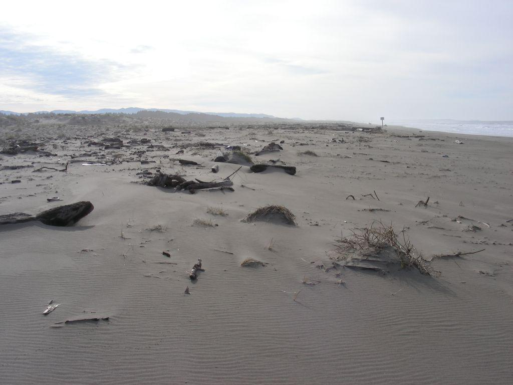 The recent high tides and storms have washed lots of wood high up on the Habitat Restoration area. This picture was taken looking south at the southern end of Mile 97.  The sign post is the southern limit of this mile.