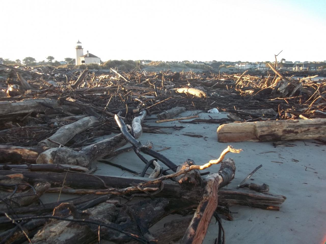 Storm and king tides bring in tons of driftwood just below the Coquille River lighthouse's upper parking lot, now closed for the winter season.