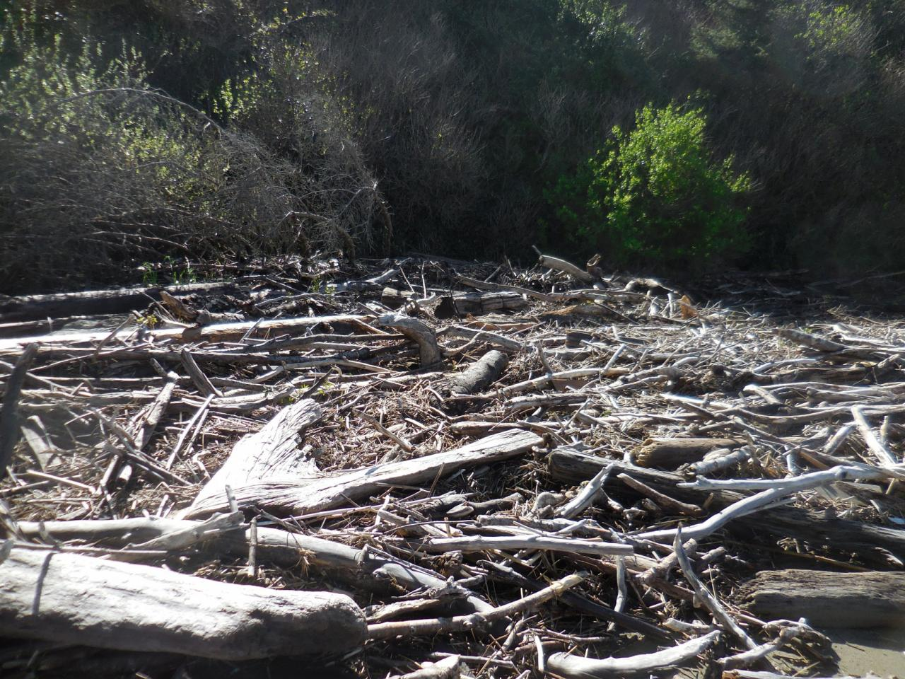 This stretch of wood debris ran from about a 1/4 mile from the edge of the bay around to the S.W.