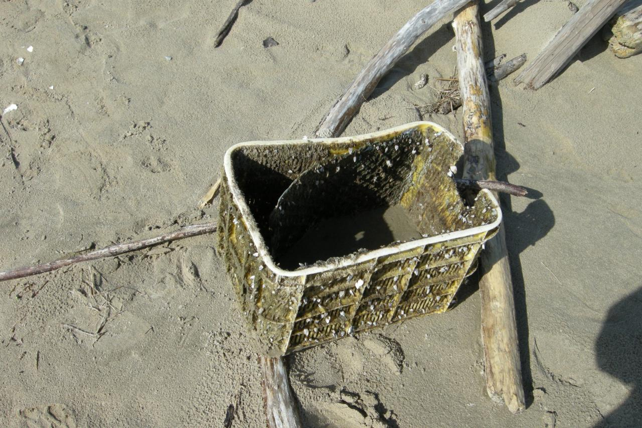 Yellow plastic crate covered with pelagic barnacles, sea weed and sand