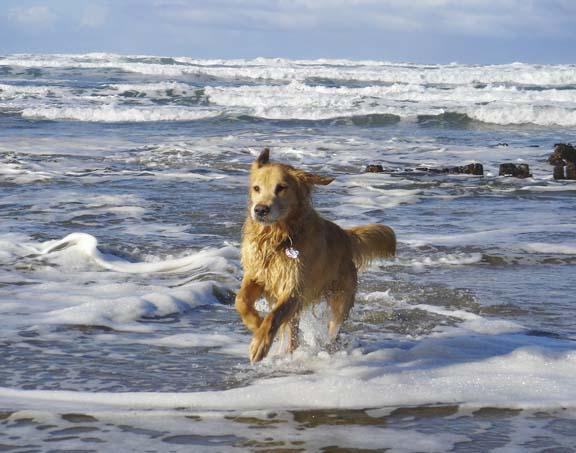 Onslow playing in the surf next to the Bella