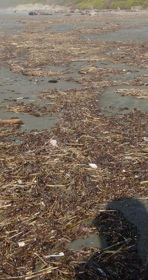 Large patches of wood debris washed down rivers from recent storms